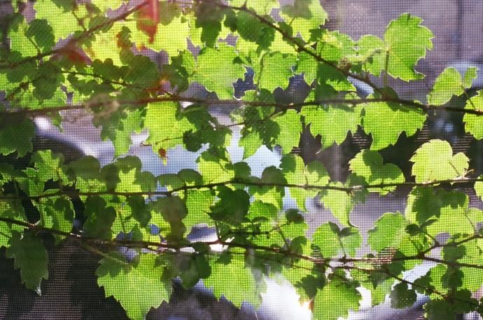 look beyond the vines